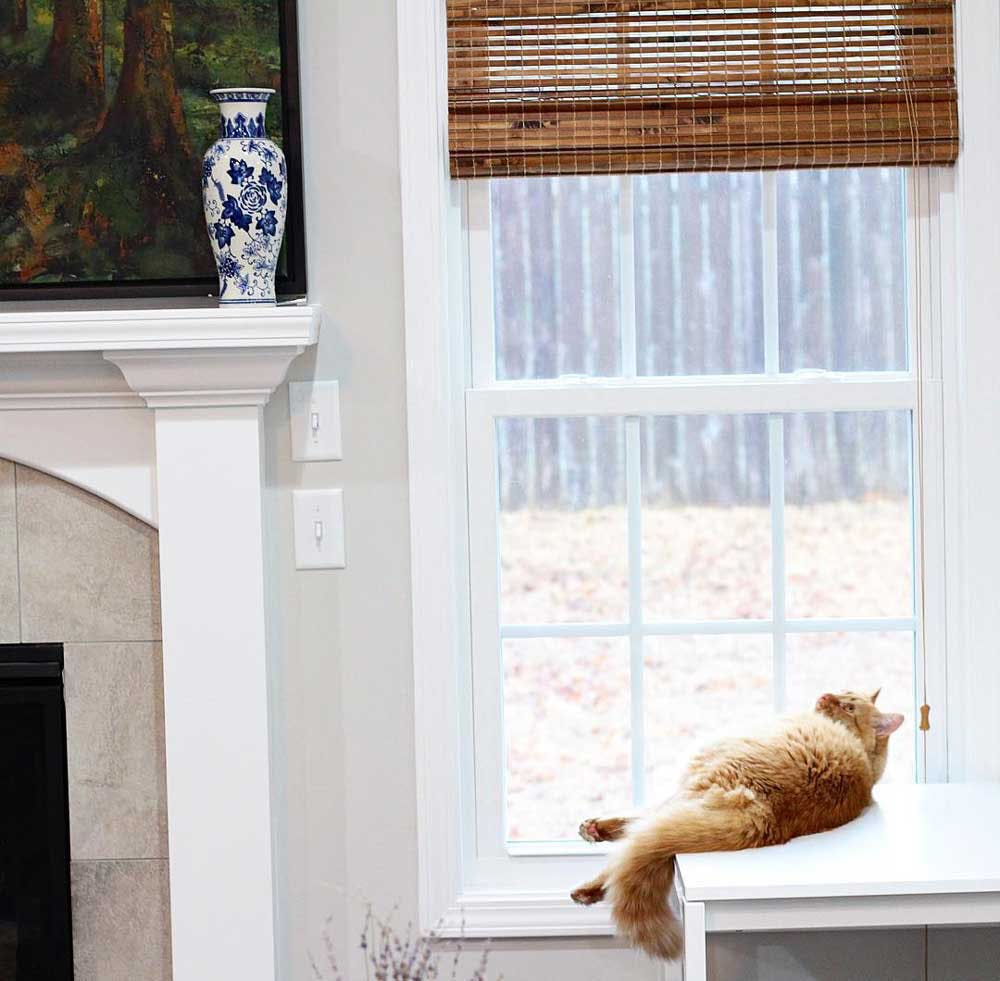 cat looking up and woven wood shades on window
