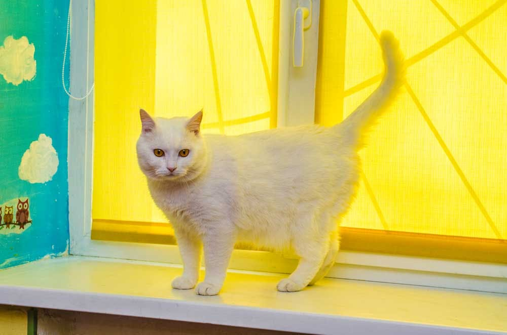 cat in front of yellow roller shades