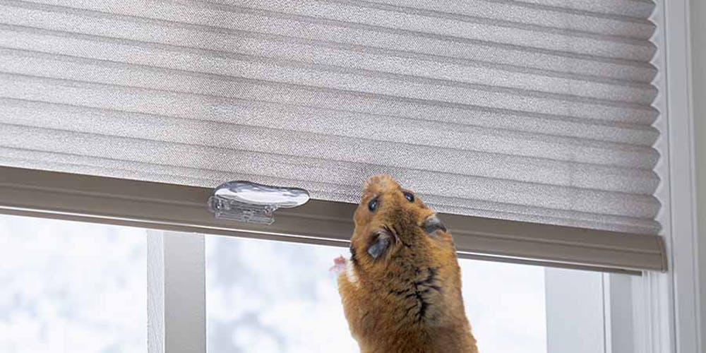Featured Post - Help Your Hamster Sleep Better With These Blinds and Shades!