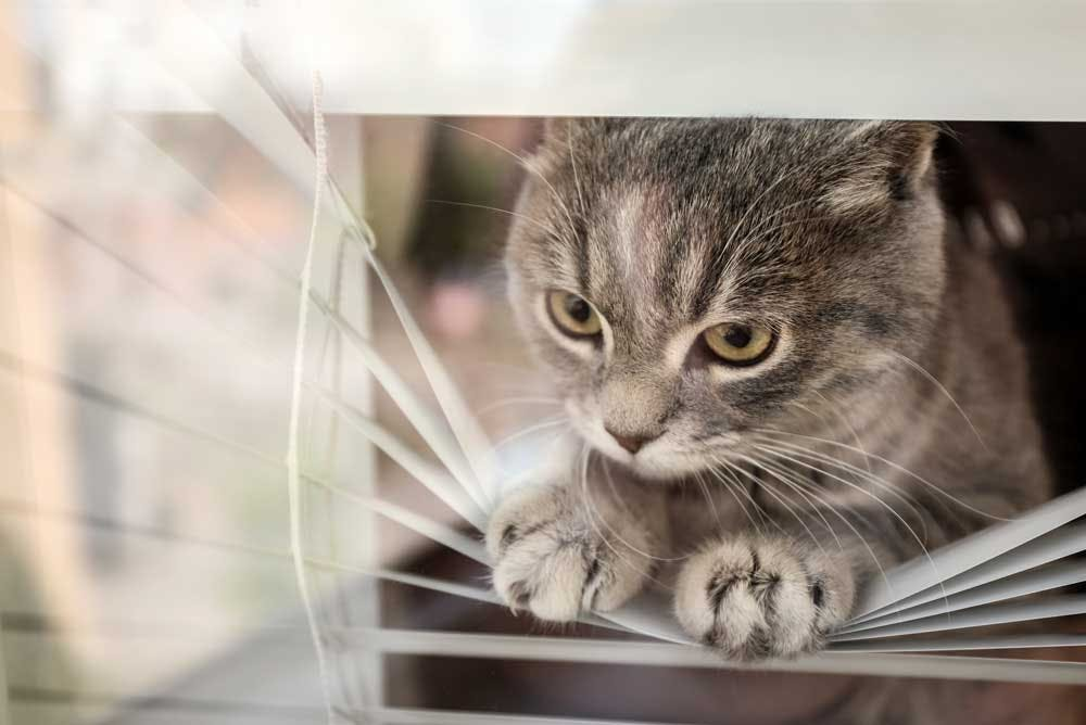 cat breaking blinds slats