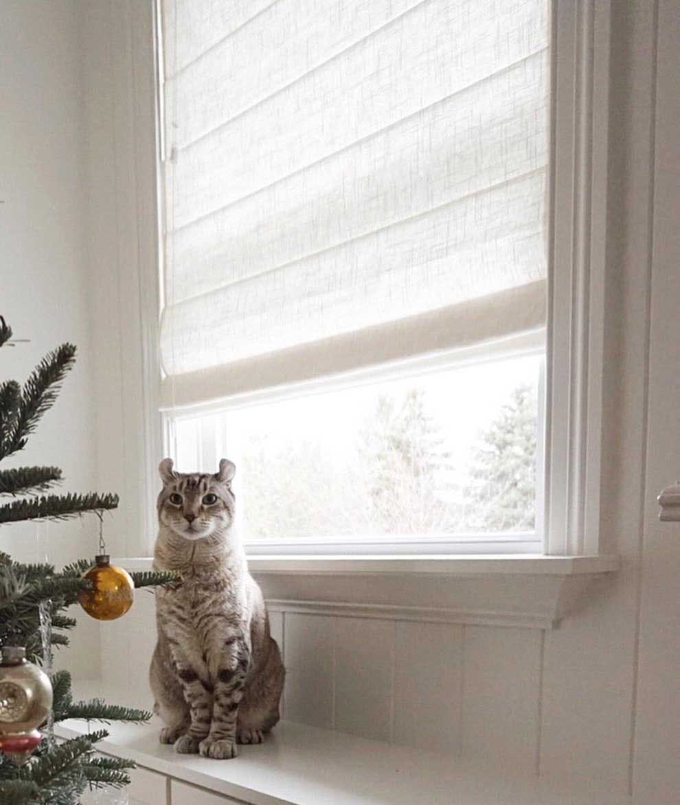 cat on window sill in front of roman shades