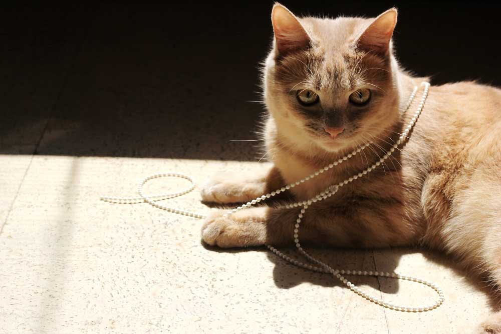 cat tangled in blinds cord