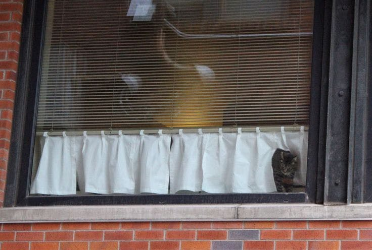 window with small curtain below blinds that allows cat to look out