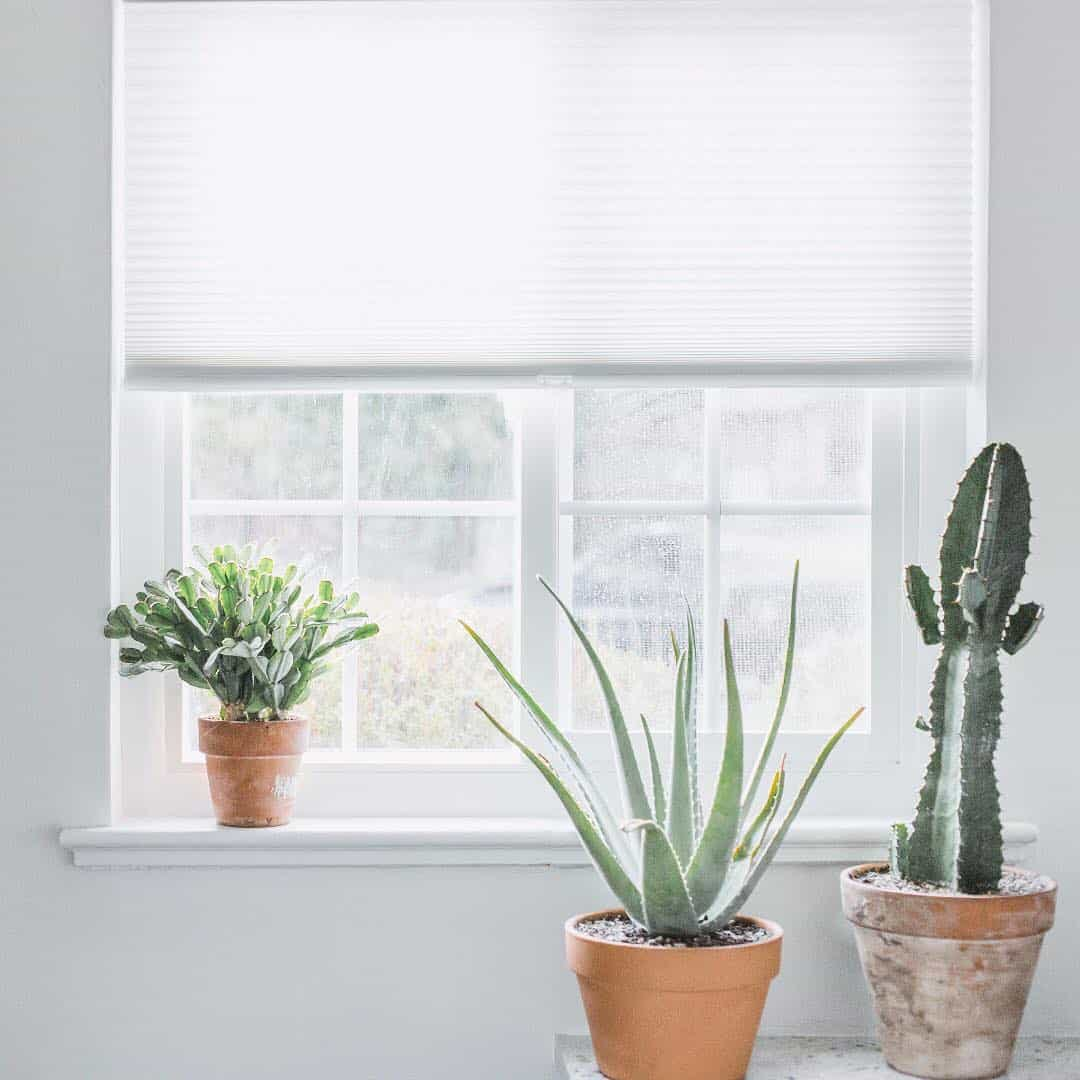 window sill with potted cacti and a white cellular shade.