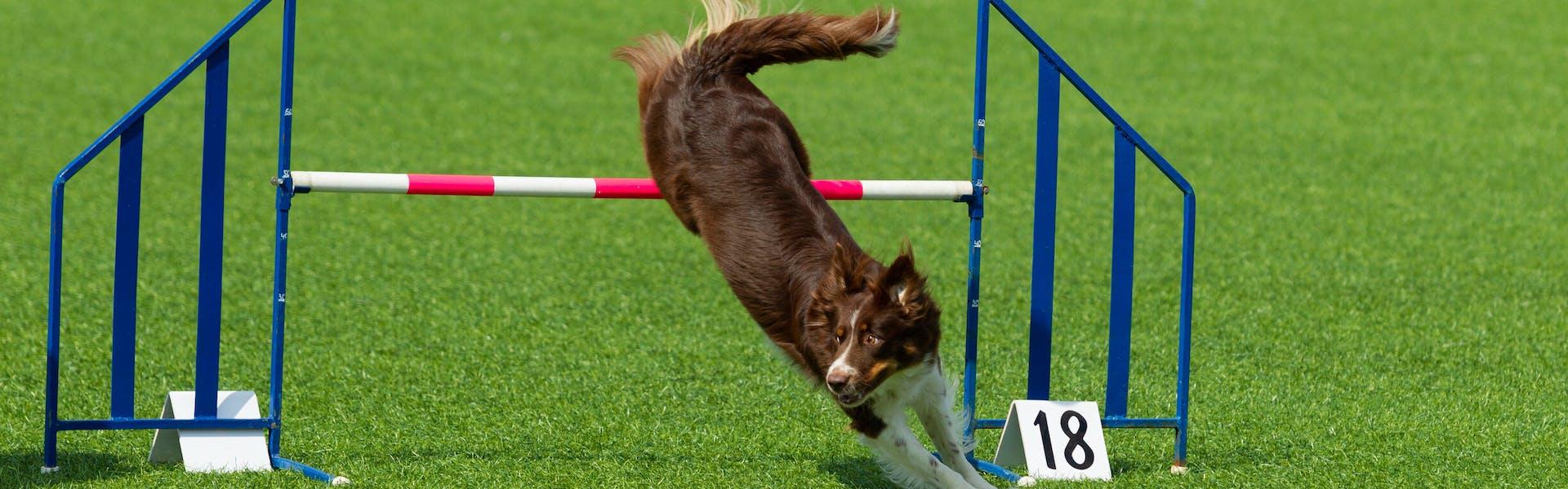 Online bokningssystem med integrerat passersystem för hundhallar