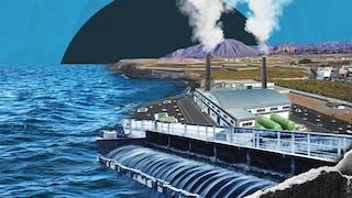 Plantas contaminadoras ponen en riesgo vida marina