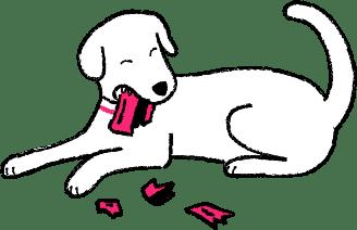 Dog eating a credit card