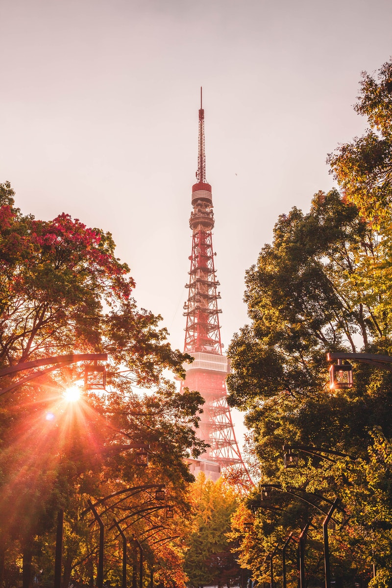 view of Tokyo Tower through trees