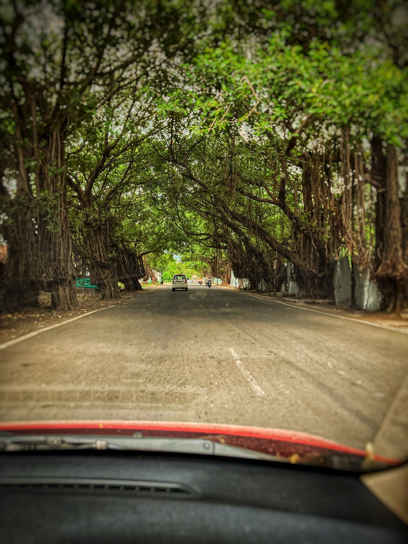 Tree-lined street in Pune, India