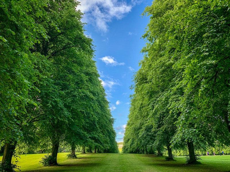 rows of trees at Stormont Estate in Belfast