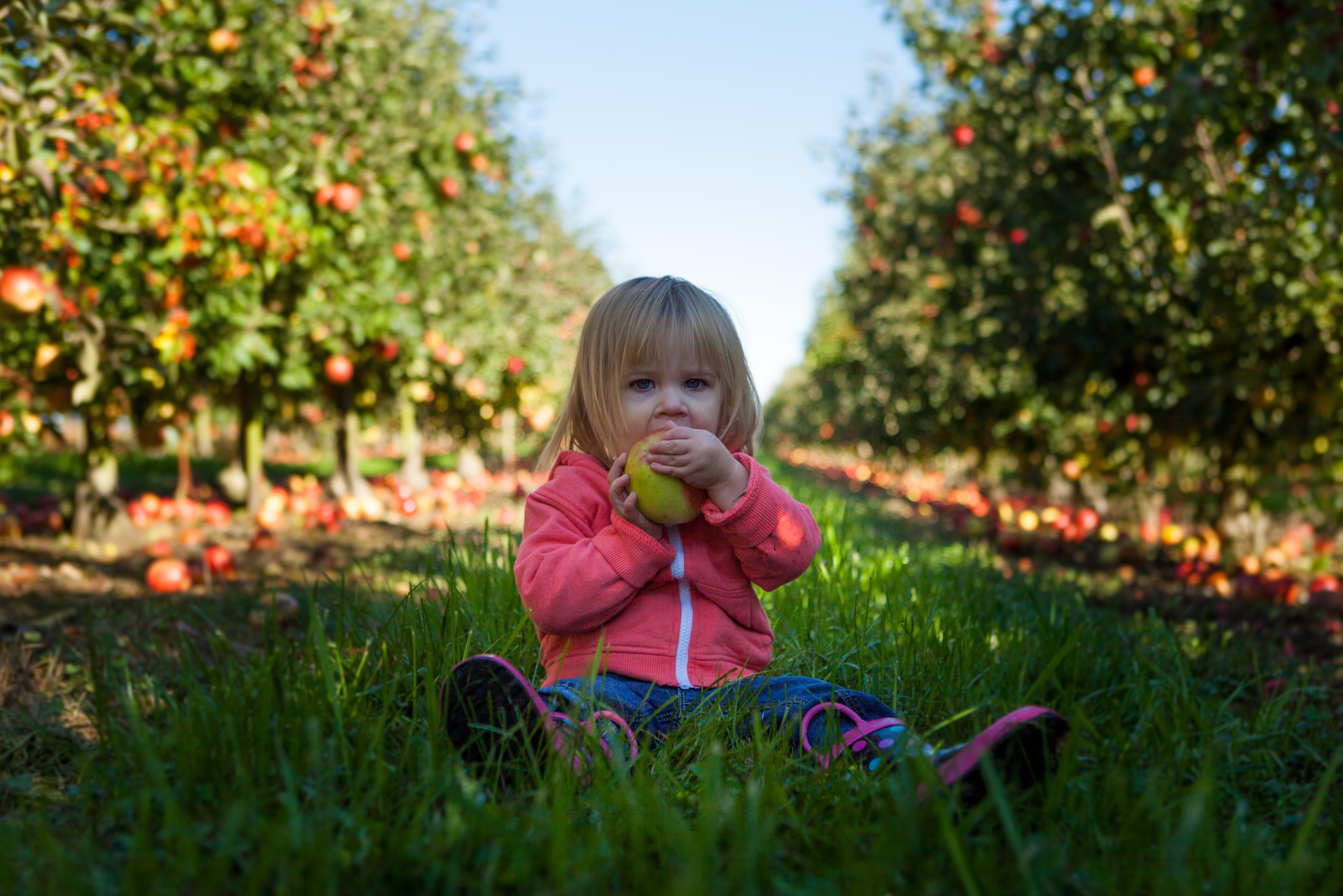little girl biting into an apple