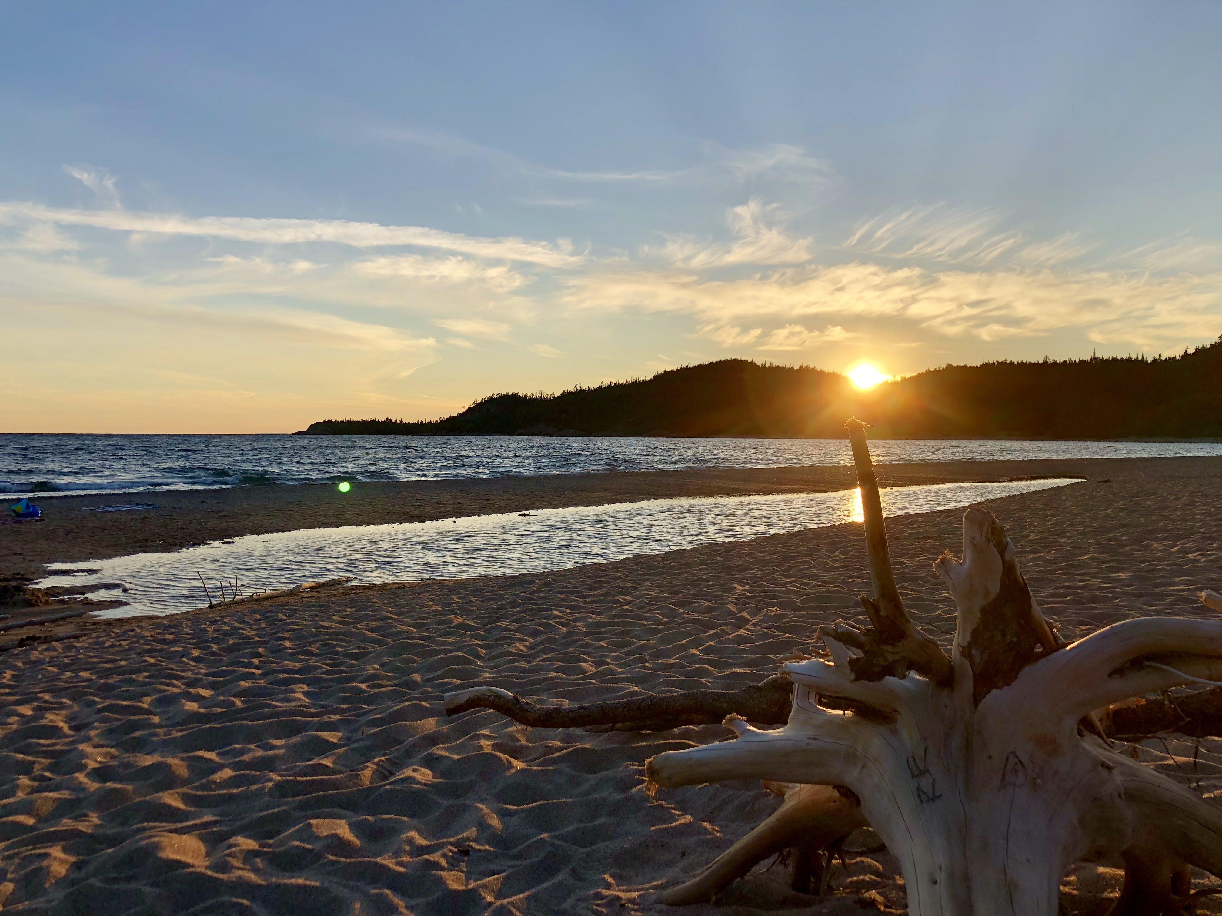 Driftwood on beach at sunset