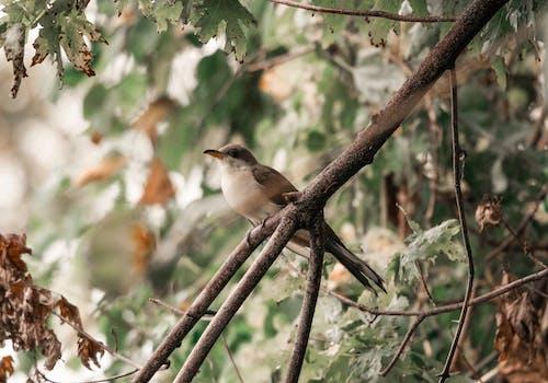 Bird standing on the tree