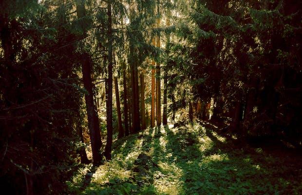 Urlaub Vorarlberg Sommer Bartholomaeberg Wald