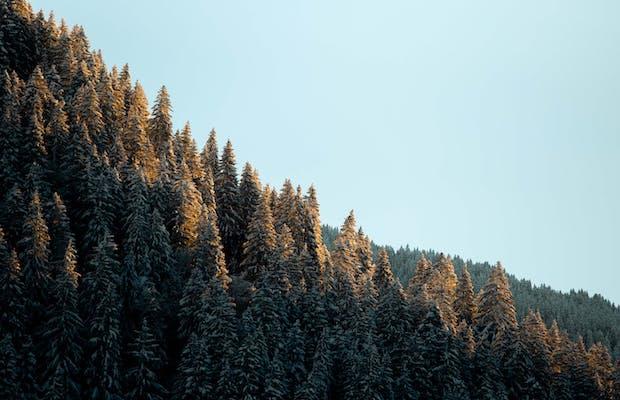 cabinski montafon cabinskiart künstler bergwelt silvretta montafon