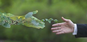 Transition écologique : comment repérer un employeur vraiment écolo ?