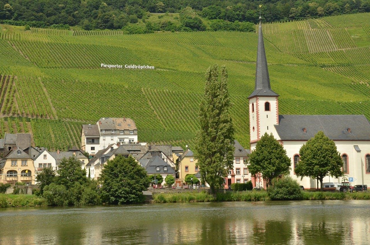 The Piesporter Goldtröpfchen vineyard - Campercontact