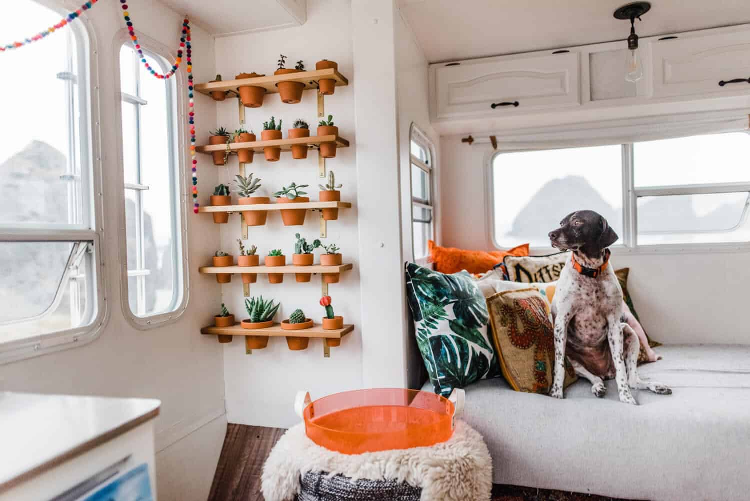 Campercontact - Brighten up the interior of your motorhome with plants (Source: Mandy Holesh @188sqft)
