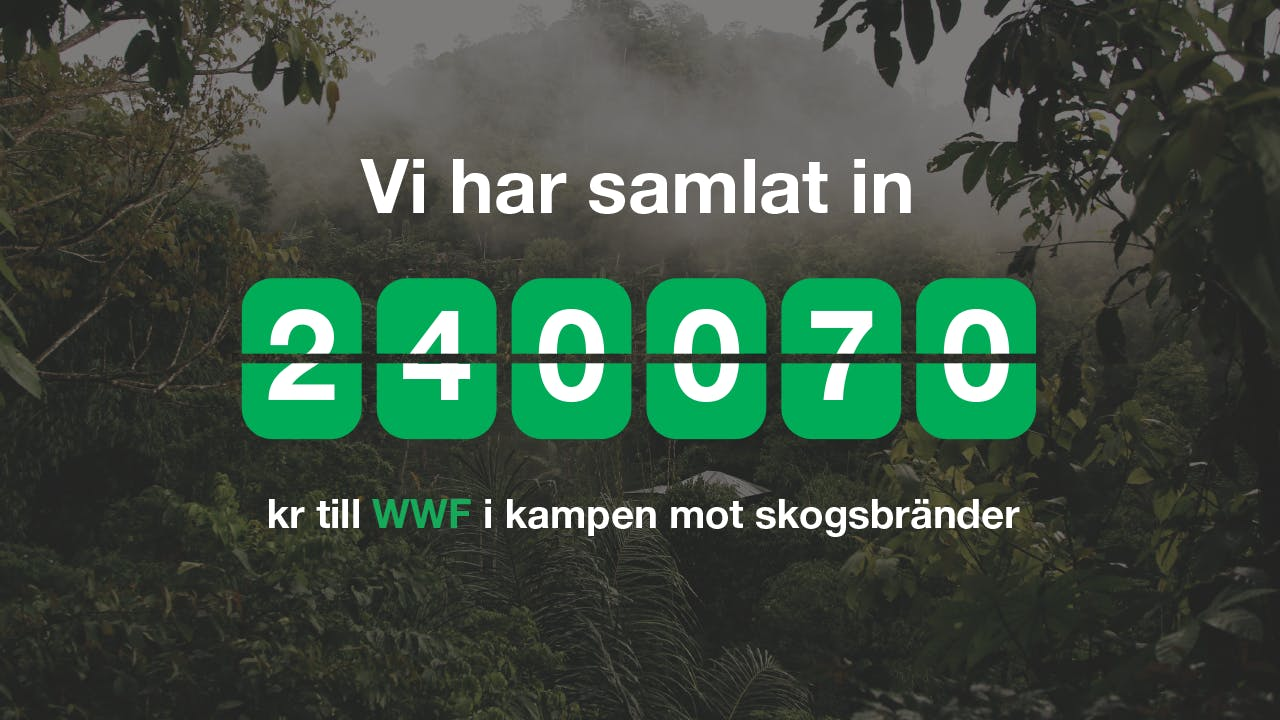 240 070 kr insamlat i kampen mot skogsbränder