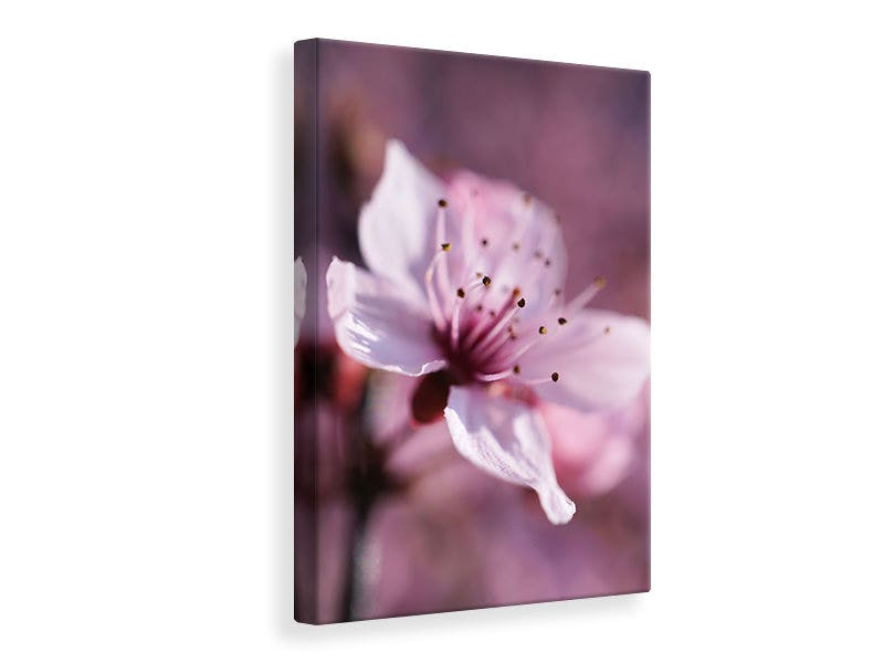 Leinwandbild Entzückende Kirschblüte