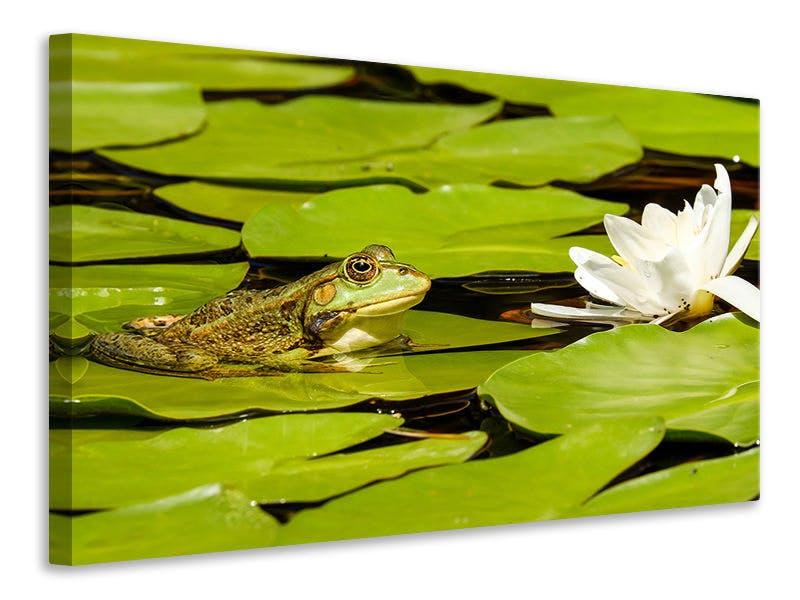 Leinwandbild Der Frosch und die Seerose