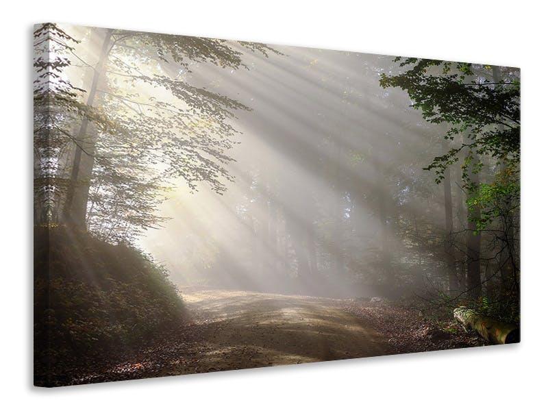 Leinwandbild Mystisches Licht im Wald