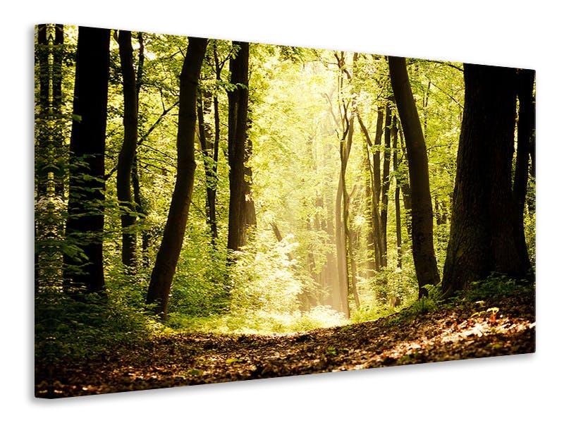 Leinwandbild Sonnenaufgang im Wald