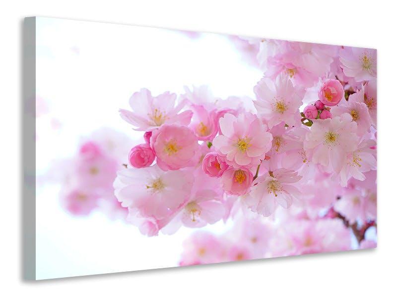 Leinwandbild Japanische Kirschblüte XL