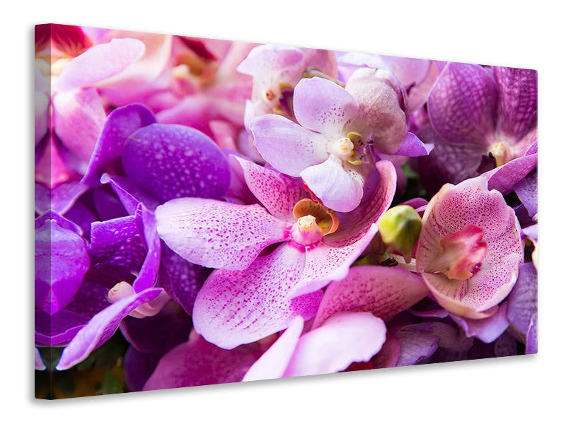 Leinwandbild Im Orchideenparadies