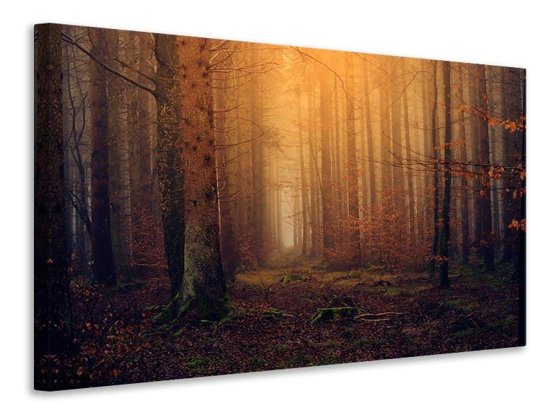 Leinwandbild Geheimnisvoller Wald