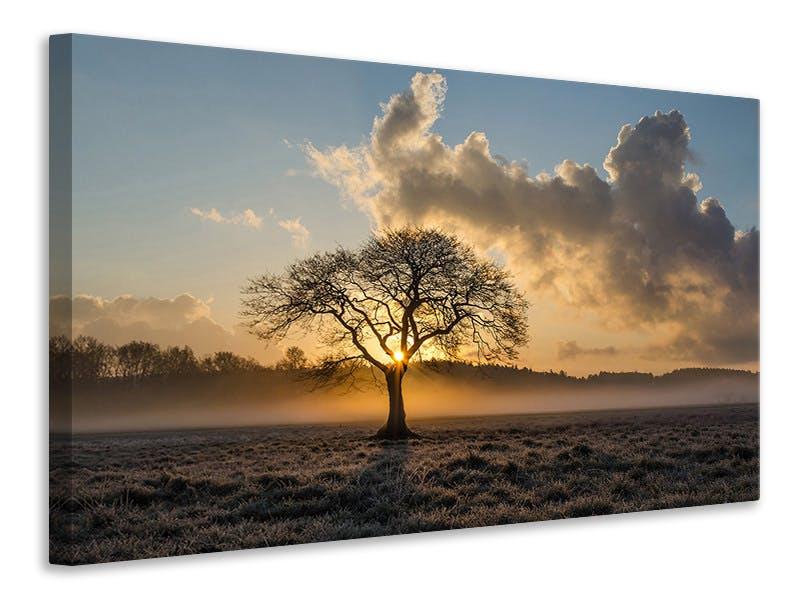 Leinwandbild Ein einsamer Baum
