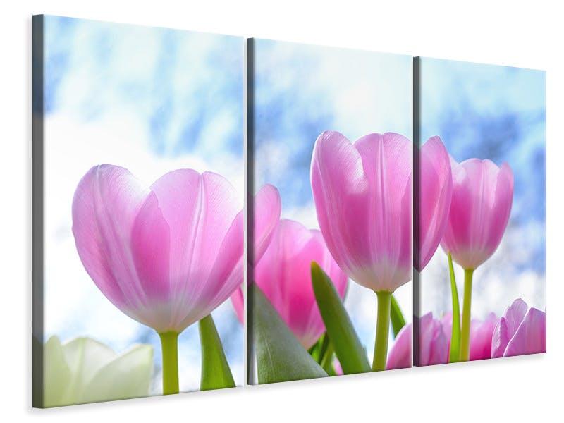 Leinwandbild 3-teilig Tulpen in der Natur