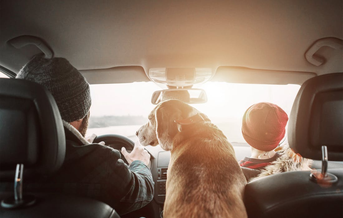 Dog and family driving