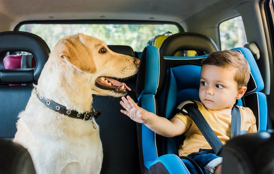 Dog and baby in car