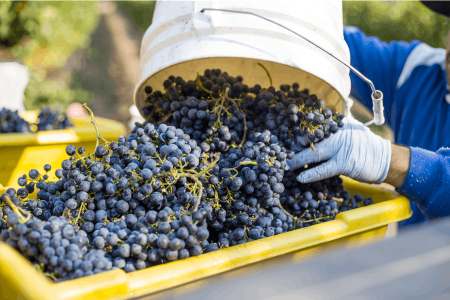 WHERE DOES CLEAN-CRAFTED WINE COME FROM?