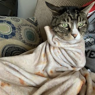 A green-eyed cat wrapped in a cream-colored blanket.