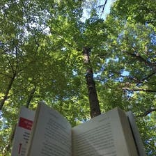 A view of trees beyond an open book.