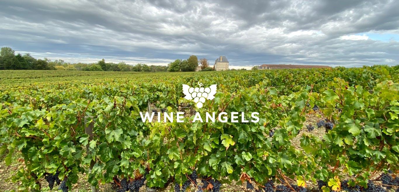 Les vignes du Château Edmus avec le logo des Wine Angels