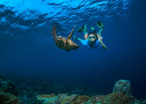 Nagez aux côtés des tortues de mer