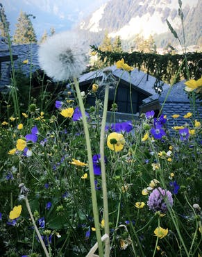 flowers and bees at hotel cheval blanc courchevel