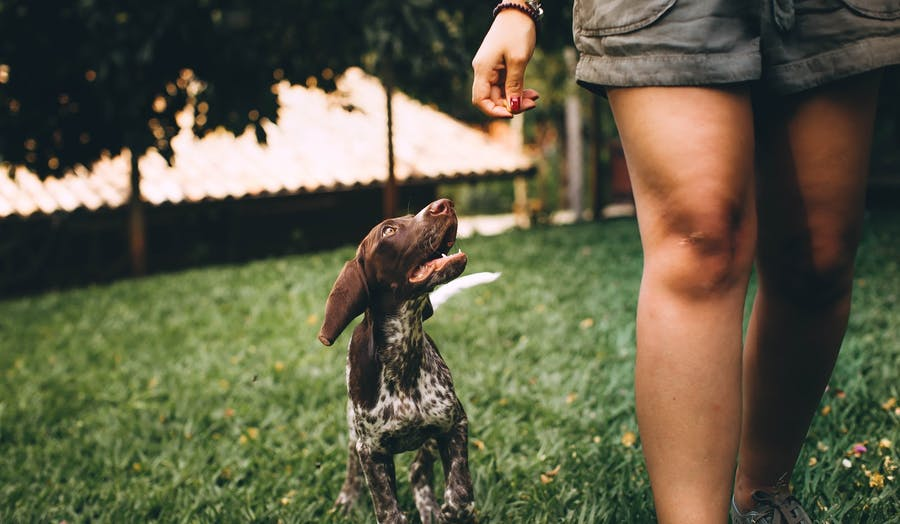 Dog running next to owner