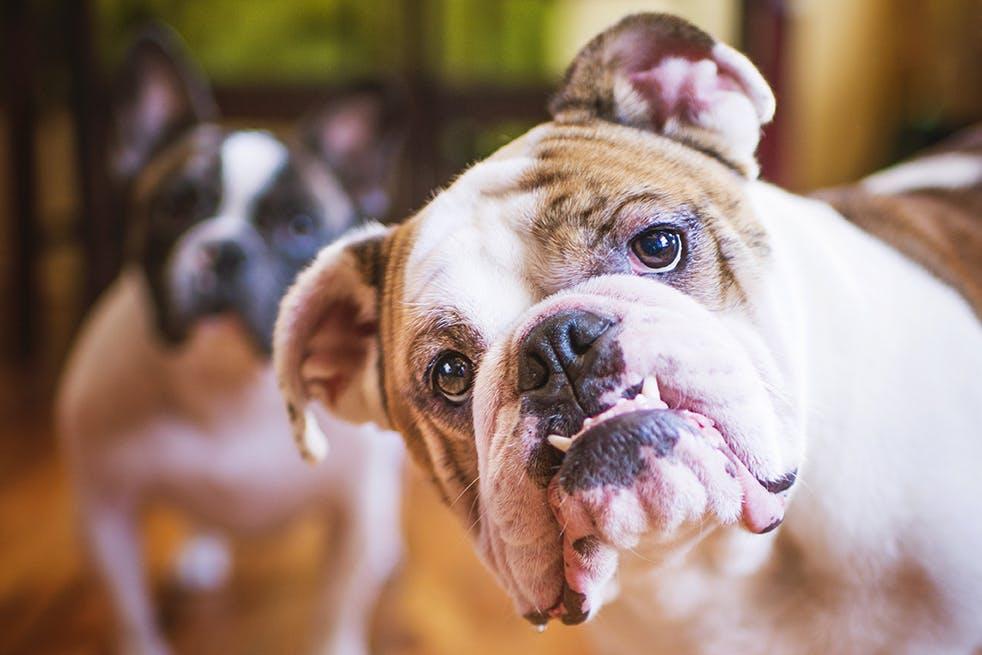 Pet Photography Ideas: Create a Pet Photo Book