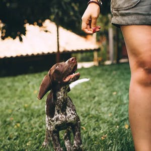 dog posing for treat in photo with owner