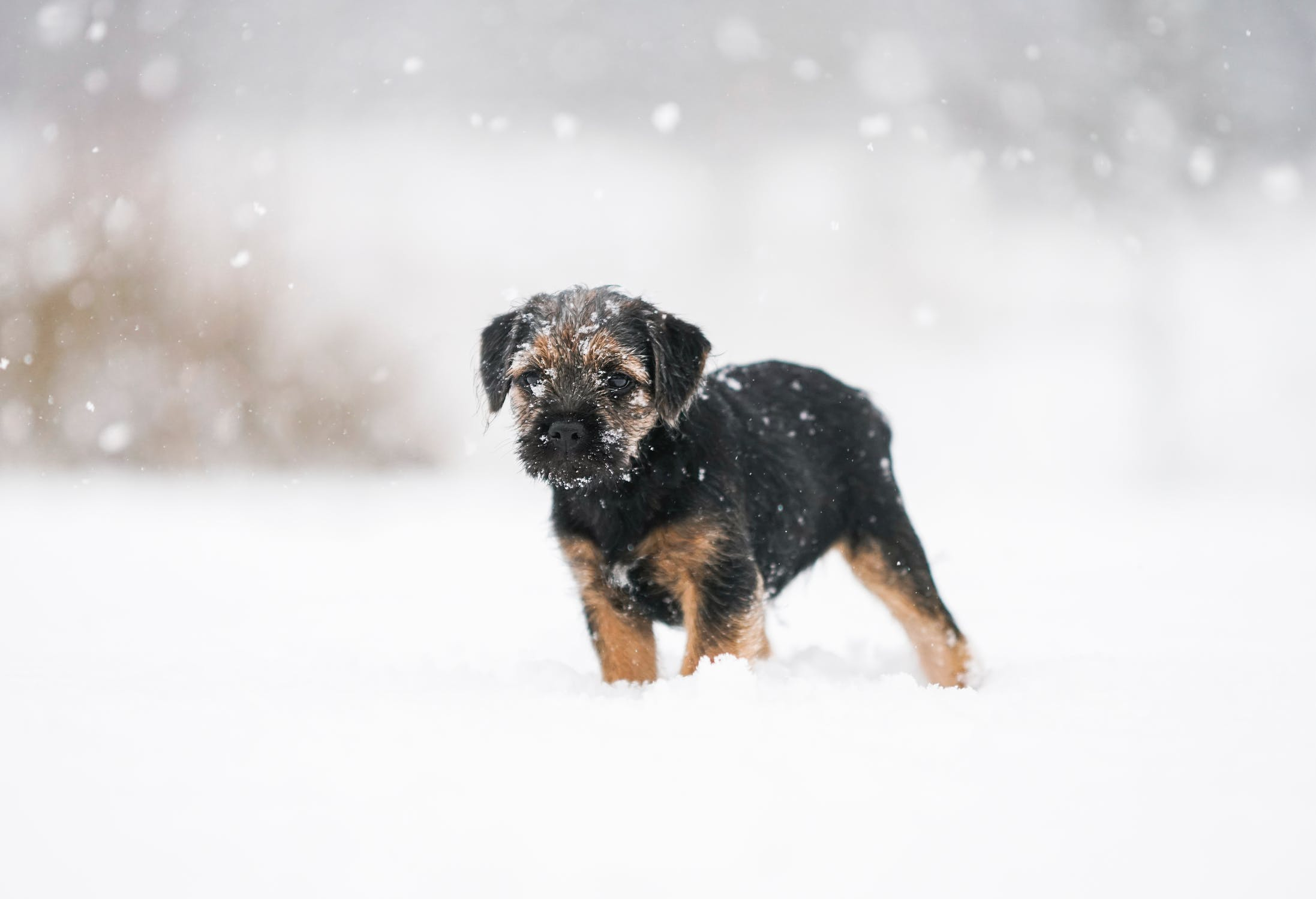 Small puppy in the snow