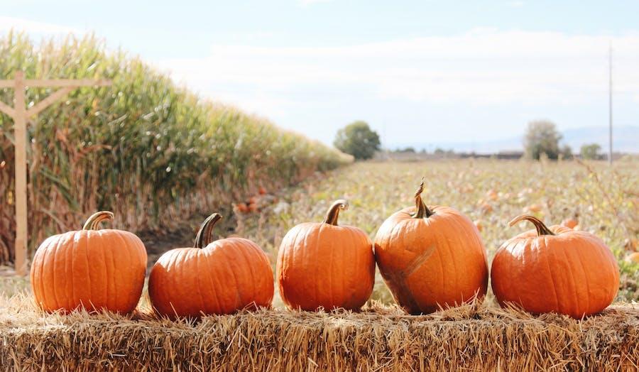 5 pumpkins sitting on a hay bail in a pumpkin patch