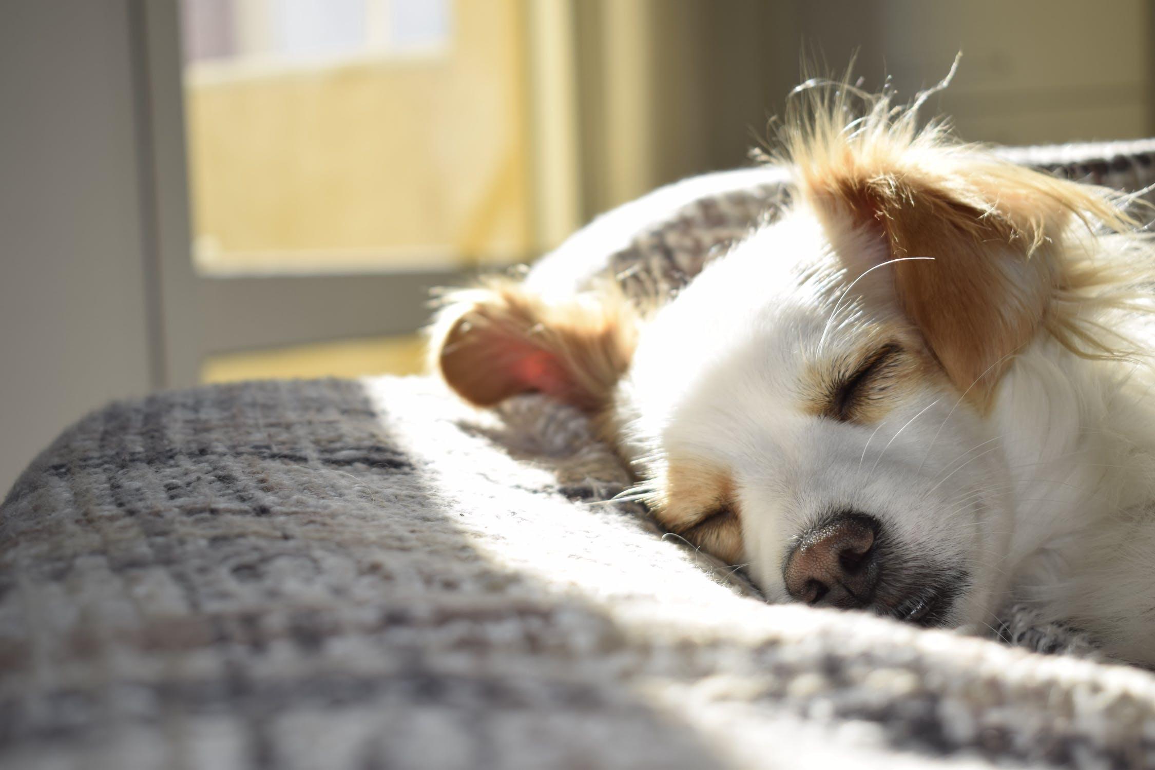 dog sleeping in the sunlight