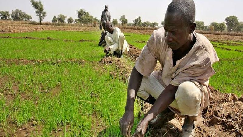 Farming in Nigeria in 2020: Farmers in South-West Nigeria lament lack of adequate rainfall as they cry out for government intervention