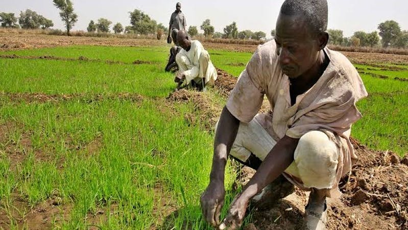 Farming in Northern Nigeria: APPEALS agric project supports Kano state farmers