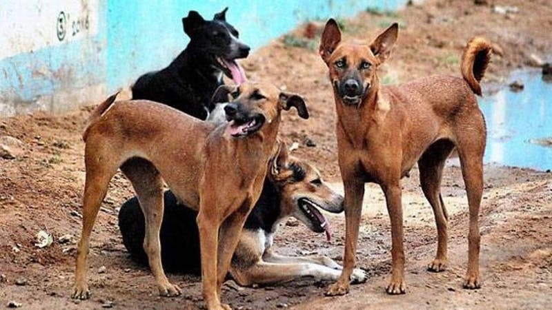 Kebbi govt has vaccinated over thousands of dogs to mark world rabies day