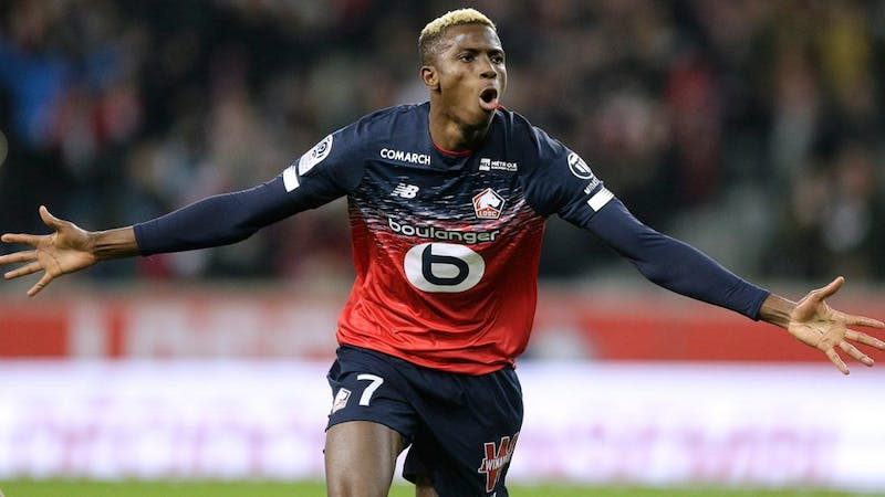 Victor Osimhen celebrates goal in Lille's outfit